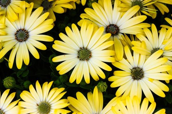 yellowful