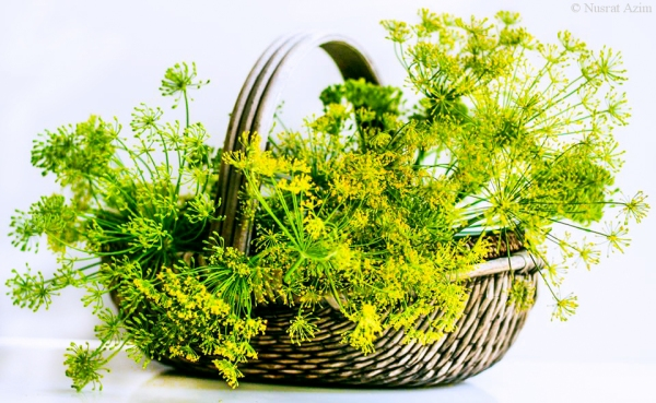 Dill basket